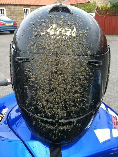 not my helmet...thankfully!
